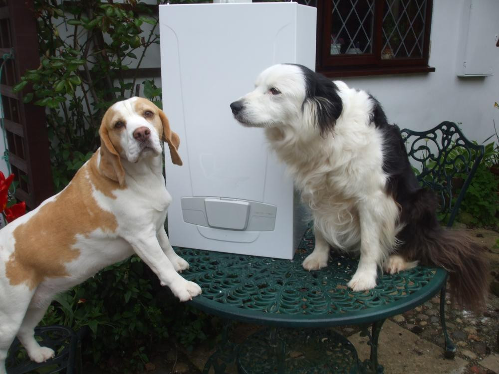 Dogs and Boiler